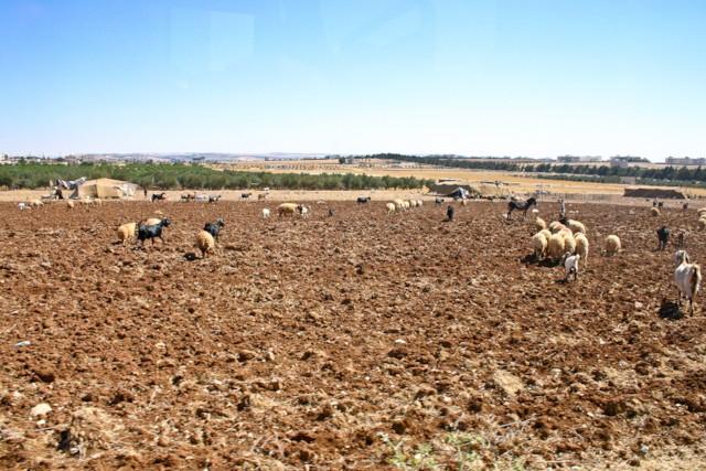 Madaba Plateau