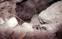 MB I Tomb Blocking Stone