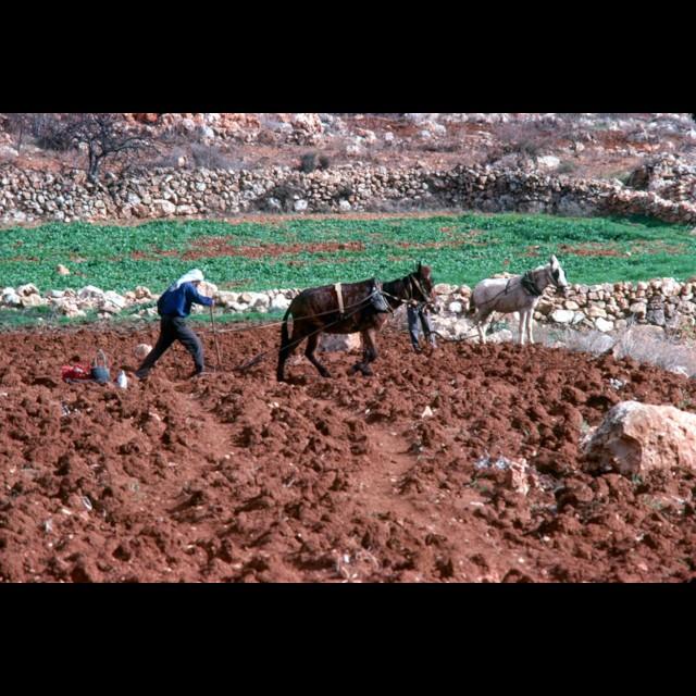 Terra Rossa Soil