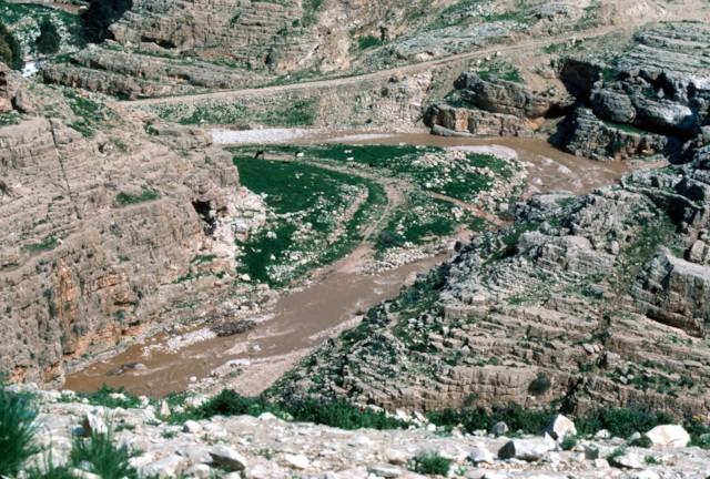 Wadi Qilt (1)