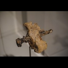 Crucifixion: Heel Bone and Nail