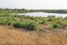 Jordan River - Lagoon at el-Araj