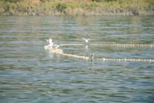 Birds on the Floats