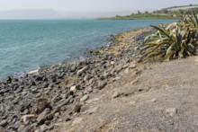 Shoreline at Capernaum