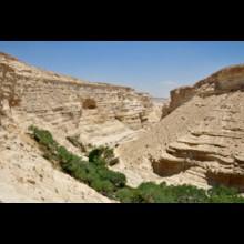 En Avedat Canyon 1