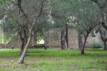 Tomb of Cicero Garden