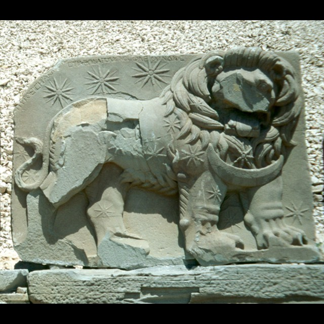 West Terrace Lion Horoscope