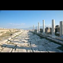 Laodicea Cardo