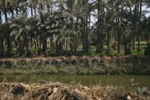 Nile Canal