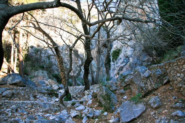 Castalian Spring Trees