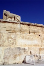 Lioness & Leopard