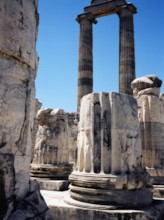 Forest of Columns 1